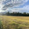 Green Acres Ranch Meadow