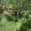 Aspen Grove Tent Camp Site #1