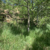 Aspen Grove Tent Site #2