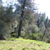 12 Secret Meadow 12