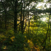 Pine Creek⛺️💫Private Hilltop Camp