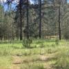 Lake Roosevelt Pines Group Camp B