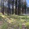 Lake Roosevelt Pines Tent Sites