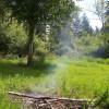 Woodpecker Meadow
