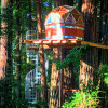 Redwood Cathedral Treehouse