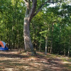 Twisted Oak Camp Site