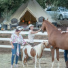 Animal Lover's  bell tent glamping