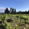 Vineyard Yurt Glamping