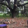 Dead End Creek - Skull Tree Camp