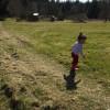 Black Lion Farms