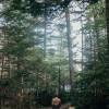 Quiet Acadia Woods Near Ocean