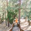 The Juniper Hideout A-frame Cabin