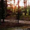 South GA Primitive Camping