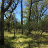 Wooded oak and pine trees