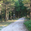 Mickey Camp - Primitive Camping