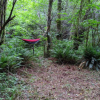 Fern Circle at WildCommons Village