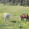 Mountain Ranch Life