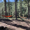 Tent Sites in the Pines.