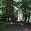 Big Trees and Steep Ravines