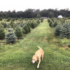 Miller's Tree Farm (1/2 Bath+Water)