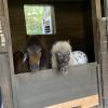 Bennington Farms Campsite