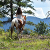 51 Forested Acres w/ Horses