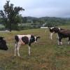 Cate Farm