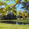 Mistan Valley Farm - The Scrub