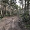 Clearing within native bushland