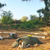 Malibu Fig Farm Camping