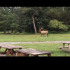 Elk Country Private Campground