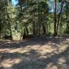 Douglas fir camping
