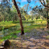 Enchanted Paperbark Sanctuary