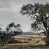 Michelago Farm - The Back Paddock