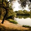 Camping under heritage oaks