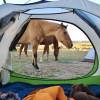 Peaceful Prairie Campsites