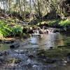 Mistan Valley Farm - The Creek