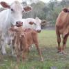Noosa Hinterland Bush & Farm Camp