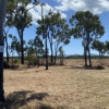 Site 4 - Gum Tree Flat