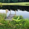 Woods edge lakeside
