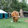 Yurt @ Yorkie Acres Goat Farm