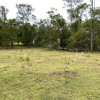 Rural Grazing Land With Cattle