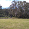 Merimbula Bushcamp 3. Big Paddock