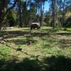 Sarabah Stud Stoney Camp