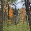 Pine Creek Campsite (Hilltop)