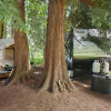 Campsite | The Forest Farmstead