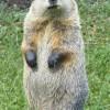 Groundhog Glade