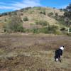 Rooster Hill Fattoria