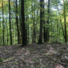 Private wooded tent site