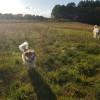 Dog camp farm